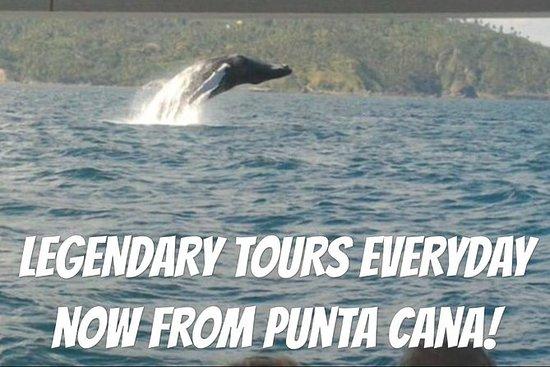 Desde Punta Cana: las ballenas...