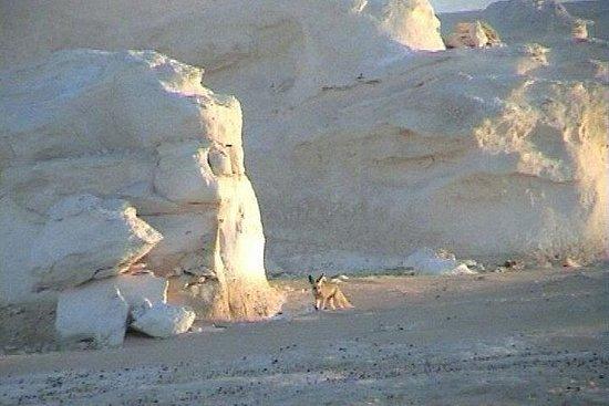 Desert Safari - Baharia Oasis, White...