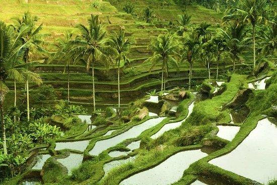 Excursão pela costa de Bali...