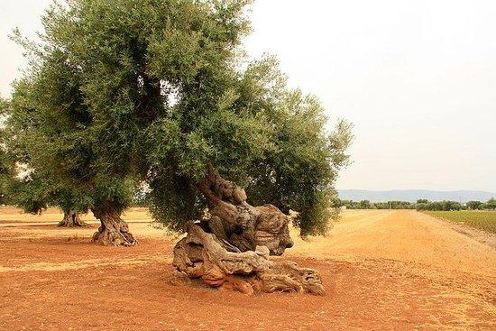 Ekstra virgin Olivenolje smaksprøving