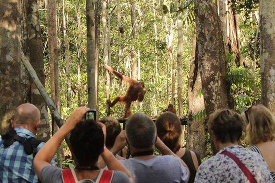 ORANGUTAN SHARE TRIP