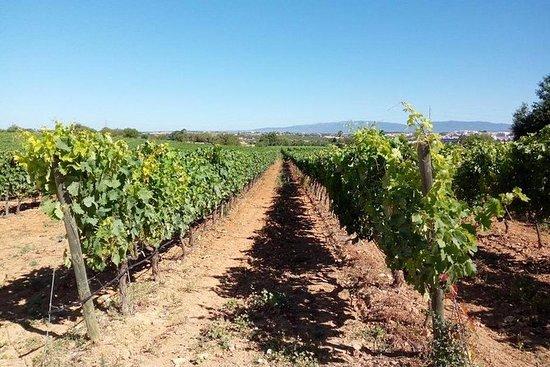 Ruta de vinos del Algarve