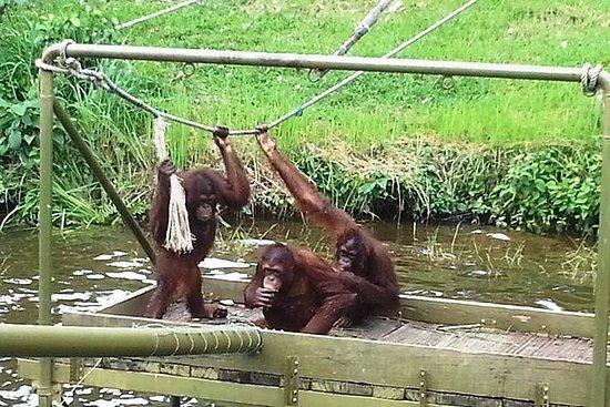 Tour a la fábrica de carbón y orangután