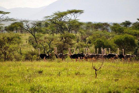 Safari salvaje de Africas