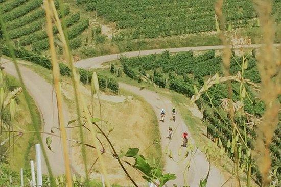 E-sykkel Barolo tur med vinsmaking
