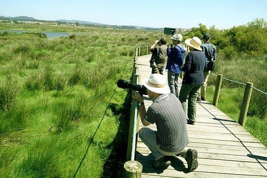Observation des oiseaux de Porto