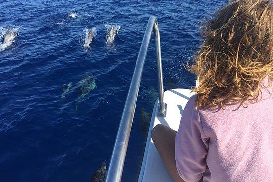 Sea Life & Walbeobachtung...