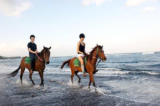 Equitación en Bali: verdadera...