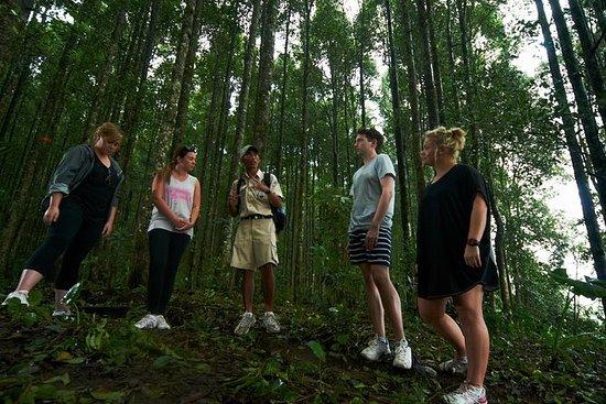 Rain Forest Trekking - La verdadera...