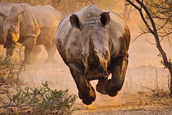 6 jours Kenya Safari combiné au Kenya...