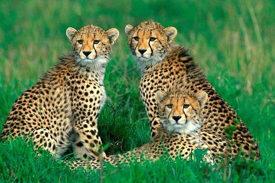 3 Days Camping Safari Big 5 spotting