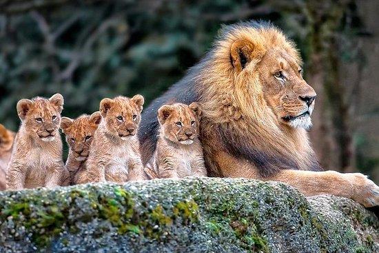 7 jours au Kenya en Tanzanie Safari...
