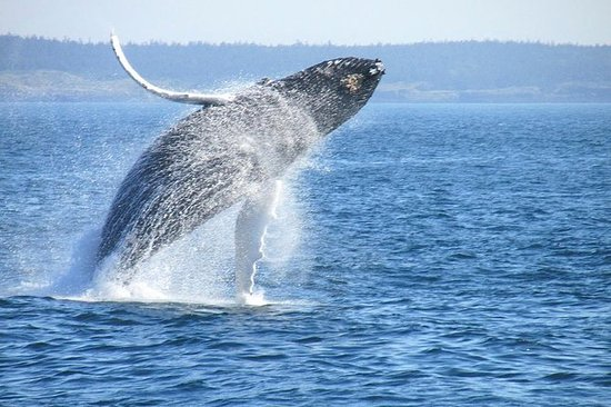 Observação Privada de Baleias e Tour...