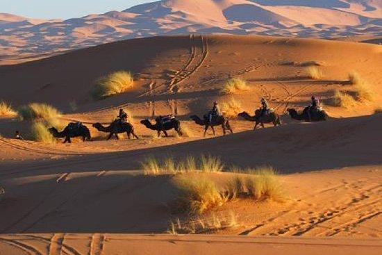 Jour et nuit par des chameaux dans...