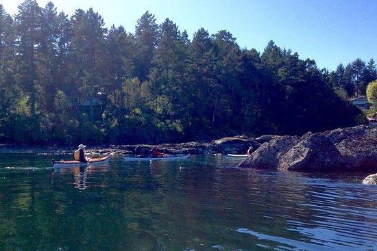 Tour in kayak di 3 ore con Swartz Bay
