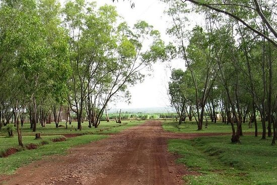 バンガロール田園地帯とブドウ畑ツアー