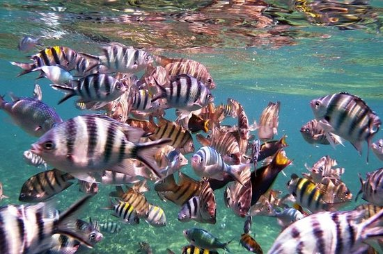 Half Day Snorkeling at Perhentian Island