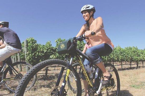 Ciclismo en los viñedos Off-Road Bike Tour