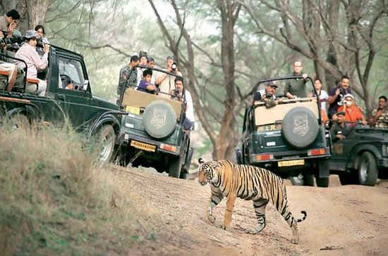Golden Triangle Tour With Safari...