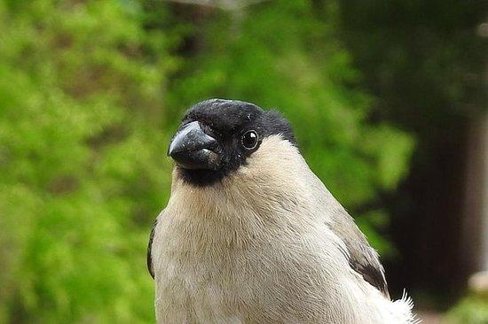 Observação de pássaros