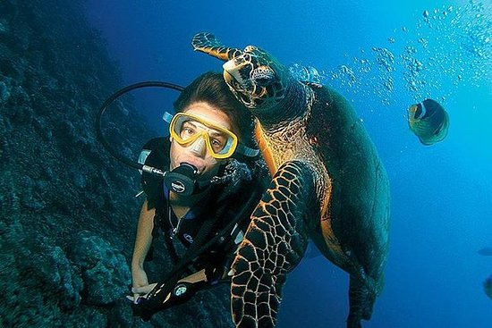 buceo por U Can Travel