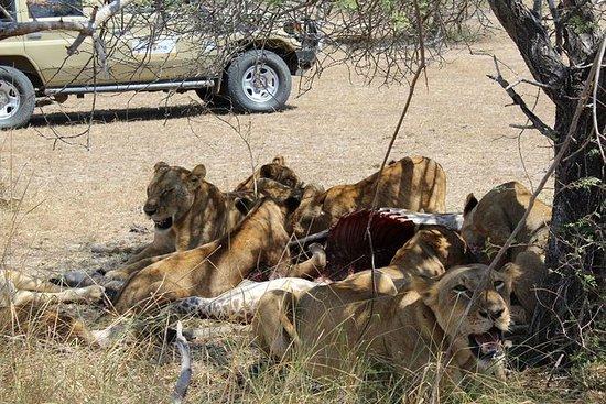 6 Tage Safari nach Selous - Mikumi...