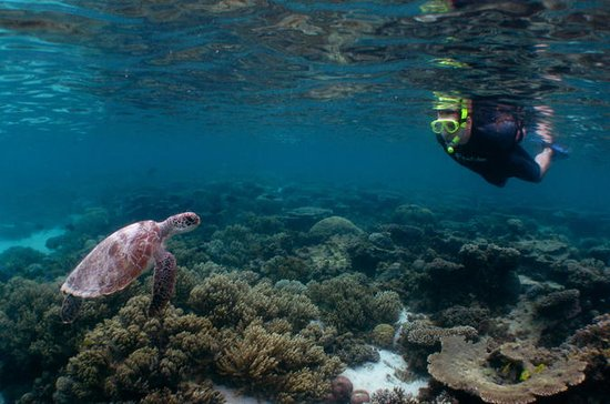 4 Day Ningaloo Reef Snorkel and Dive...