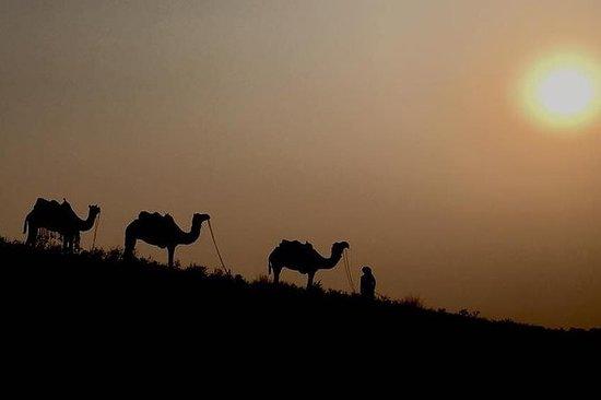 Incroyable Rajasthan avec Foire de...