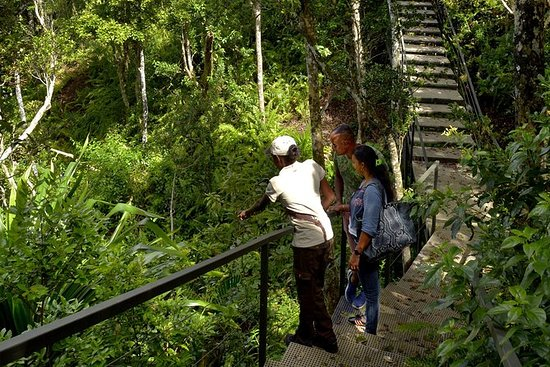 Ebony Forest Reserve Chamarel: Ticket...