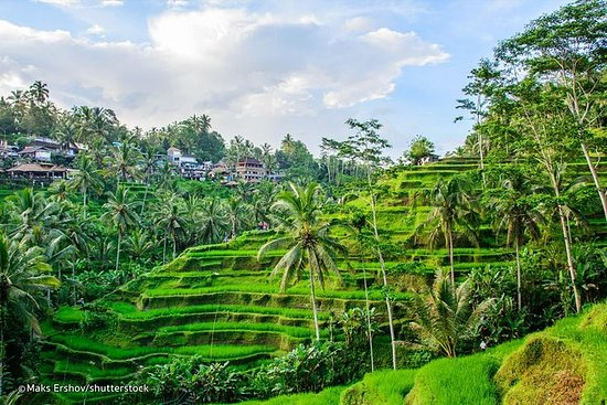 Private Sightseeing Tour: Ubud...
