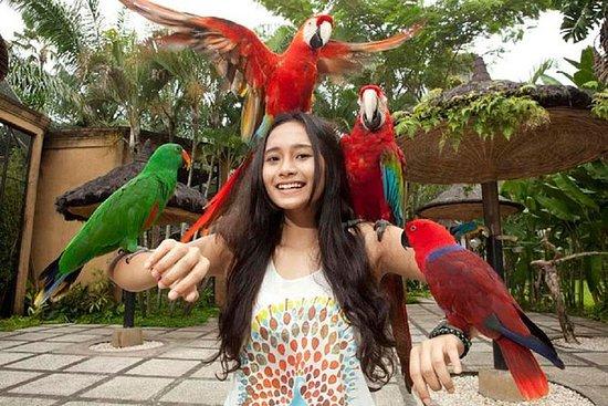 Cosmo Bali Private Tours Bali Bird...