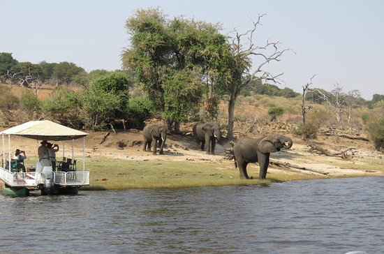 Full Day Chobe Safari incl Lunch from...
