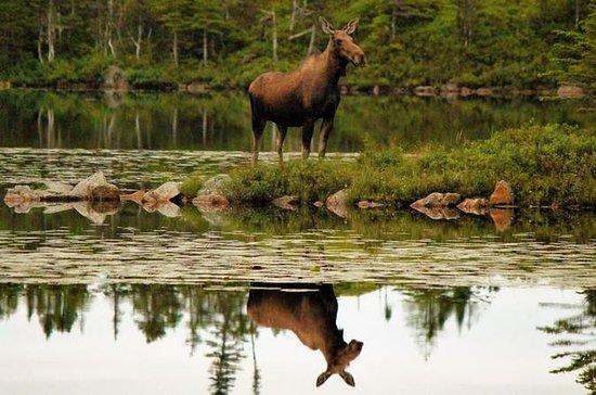 All Terrain Vehicle tour the Newfoundland Wilderness