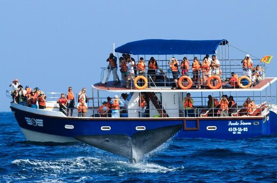 Mirissa Whales & Dolphin Watching Day Trip from Bentota - All Inclusive: Mirissa Whales & Dolphin Watching day trip from Bentota