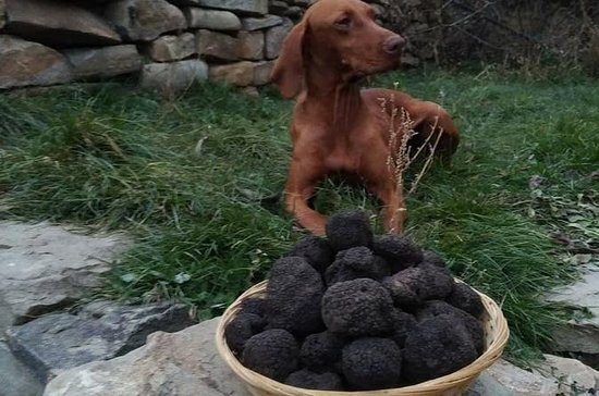 Truffle Hunting & Tasting in...