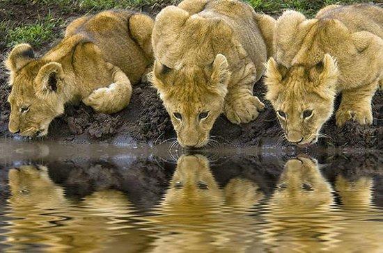 Safari de 3 jours à Tarangire, au lac...