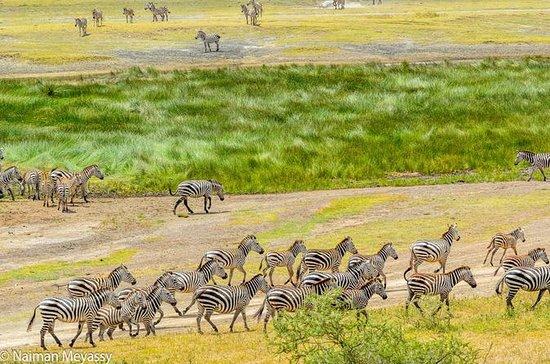 5 jours de safari en Tanzanie