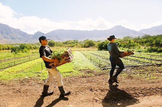 Farm to Forest, Oahu Tour