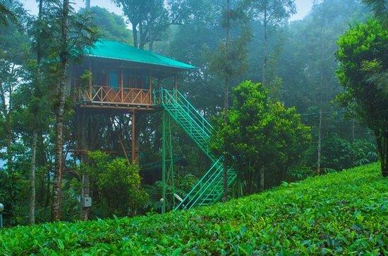 2 Días Munnar Treehouse Escape