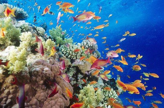 Dykningstur från Hurghada