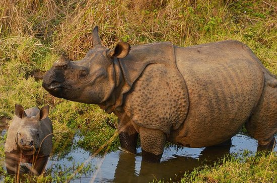 3 Nights Private Tour of Chitwan...
