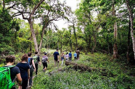 1 Night Chitwan Jungle Tour
