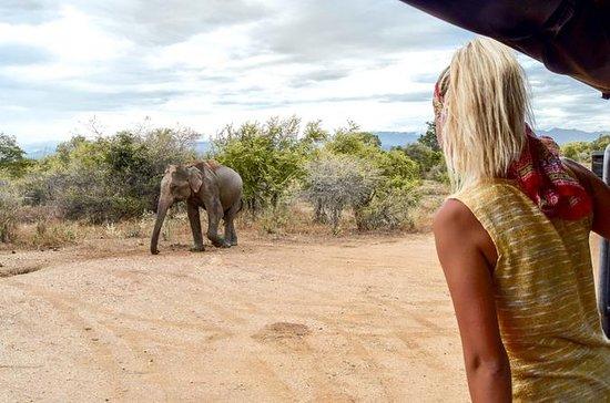 Safari nel parco nazionale di