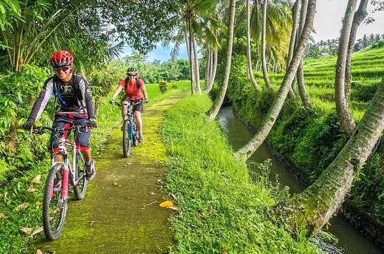 Tour en bicicleta por Sigiriya