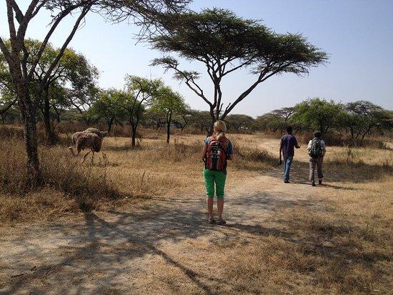 Zebra Guest House: zebra guesthouse trips
