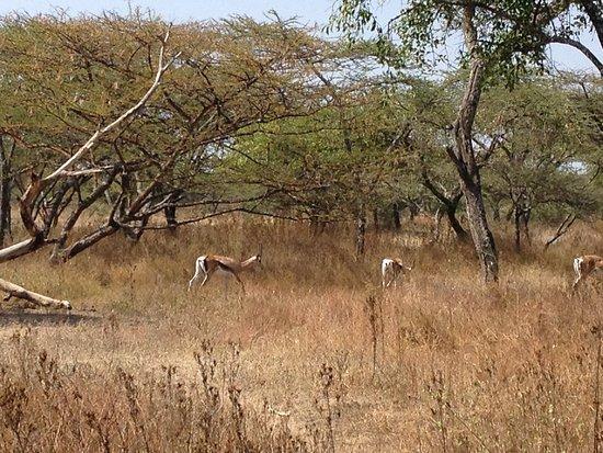 Zebra Guest House: Abiyata National park