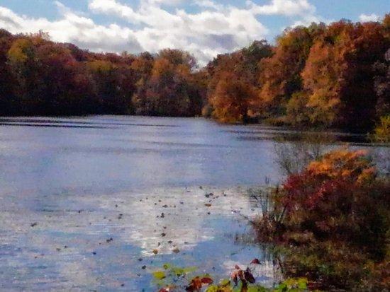 White Plains, KY: Lake view