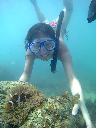 Snorkeling at trikora beach