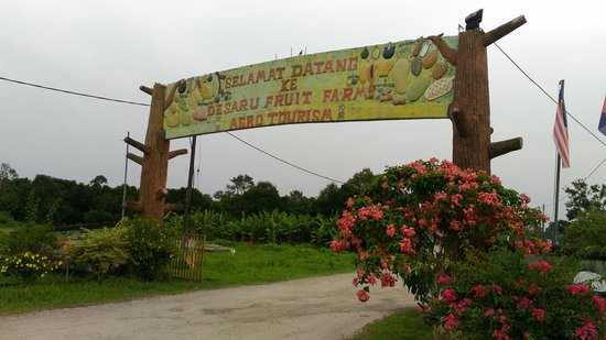 Desaru Fruit Farm