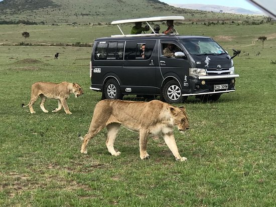 Nairobi, Kenya: Game drives are the best and this is usually the height of the entire safari